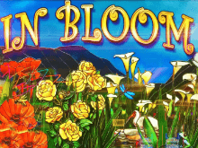 Большие шансы на удачу на игровом автомате In Bloom